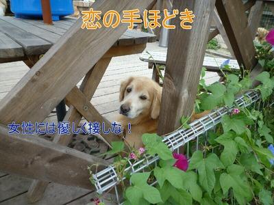 blog2_090927