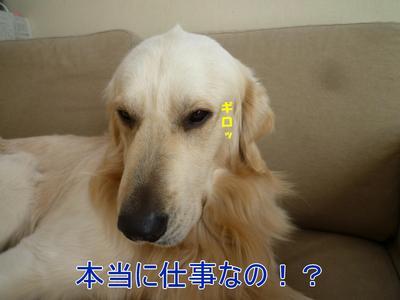 blog1_100522