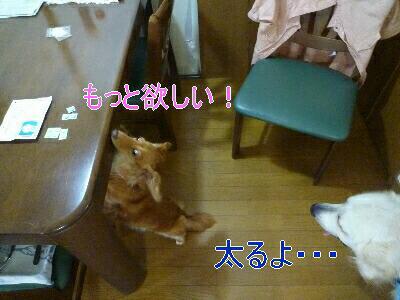 blog4_090829