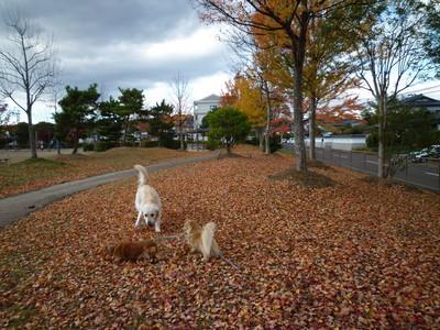 blog4_091118