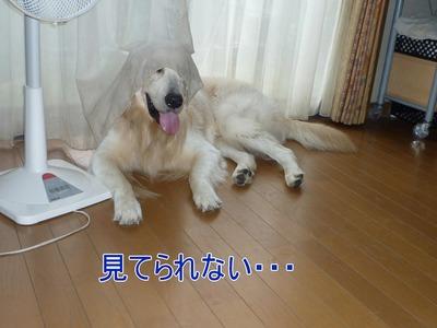 blog4_09018