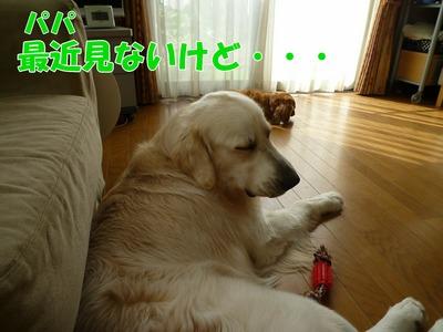 blog1_091030