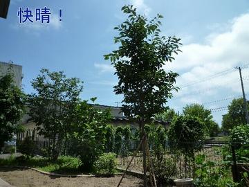 blog1_090802