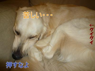 blog3_091128