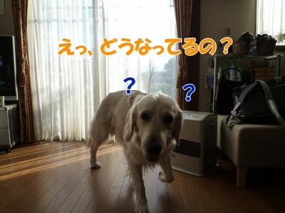 blog1_091126