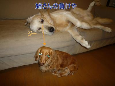 blog4_100210