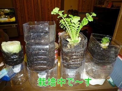 blog4_091119