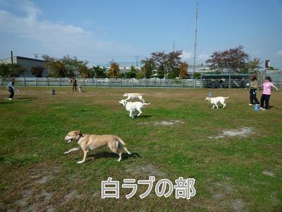 blog11_091019