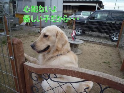 blog7_100127