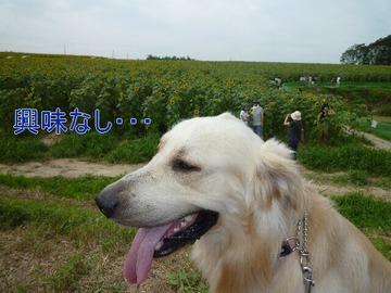 blog3_090815