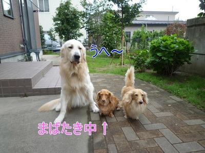 blog1_09016