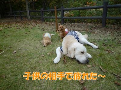 blog4_091026