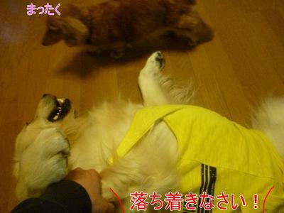 blog4_104015