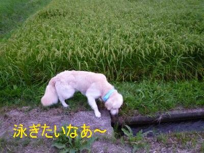blog1_090831