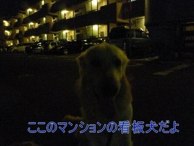 blog3_090828