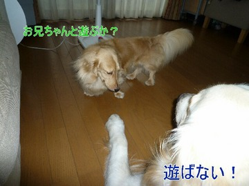 blog3_090809