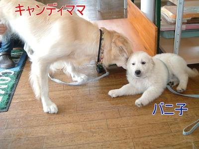 blog9_20100710