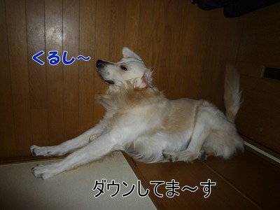 blog2_091027