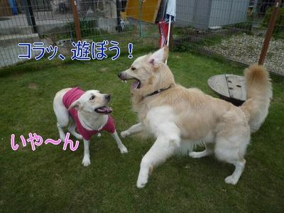 blog1_090927