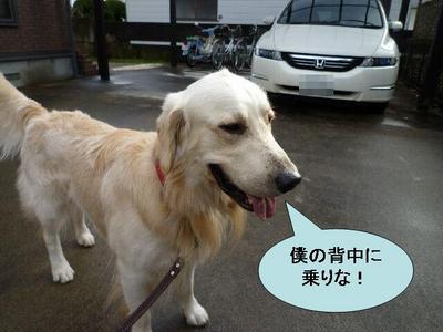 blog4_091215