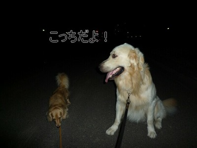 blog2_090828