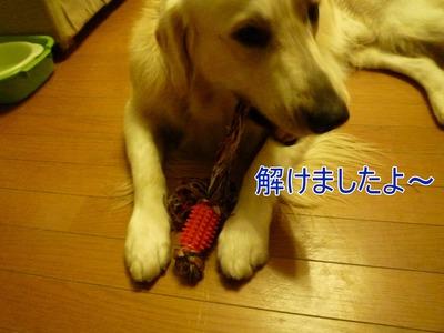 blog5_091130