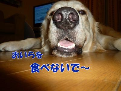 blog4_090930