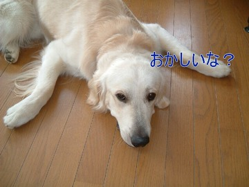 blog1_090731
