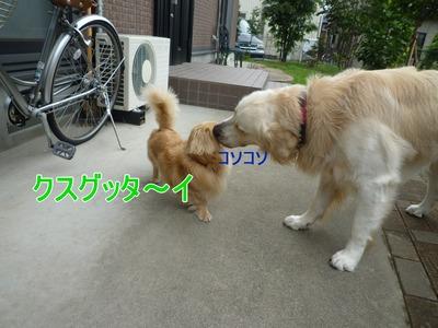 blog4_09016