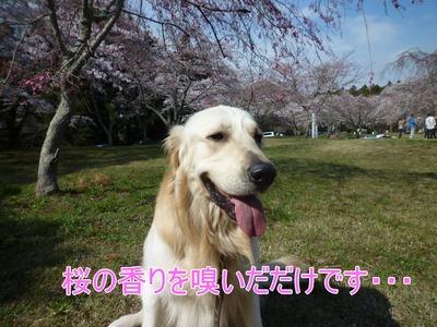 blog11_104024