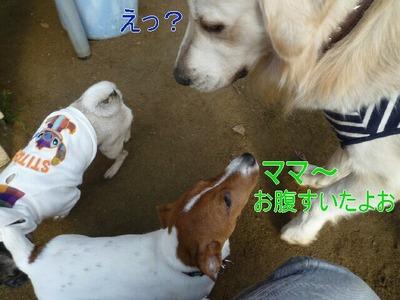 blog1_091224