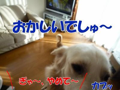 blog4_091126