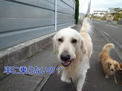 blog2_091229