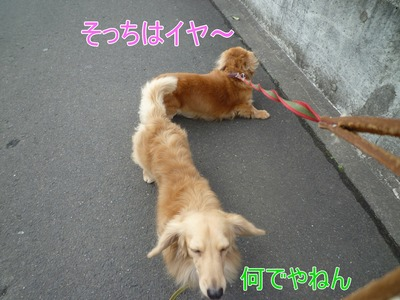 blog3_091229