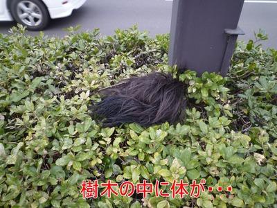 blog5_100320