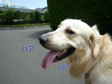 blog8_090802