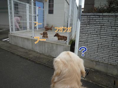 blog4_091229