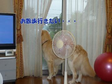 blog1_090809