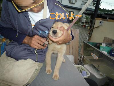 blog8_090927
