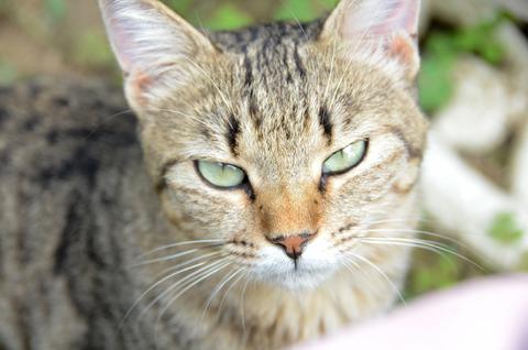 CAT_l