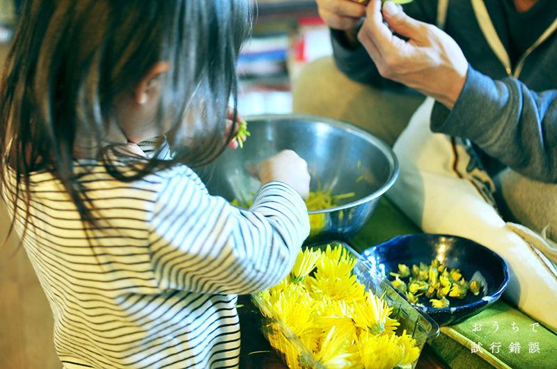 菊花をむしる娘