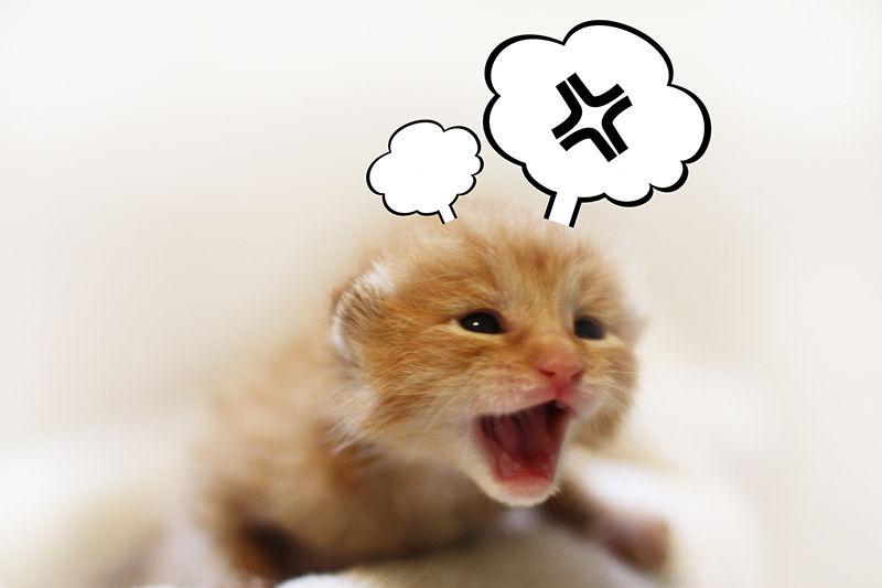 イライラ猫