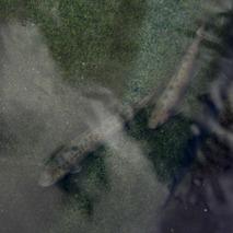 181012 ヤマトイワナ到着  (15)