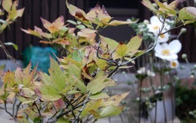 180918 庭の花 (14)