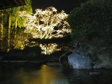 a-sakura