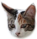 スモール三毛子猫A
