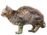 スモール待ち猫
