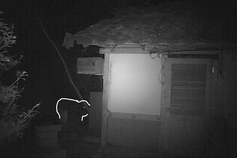 l監視カメラ03