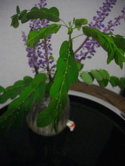 いけられた葉と花 (1)