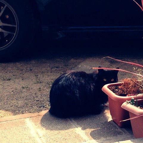 猫が遊びにきました